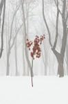 Misty winter #4