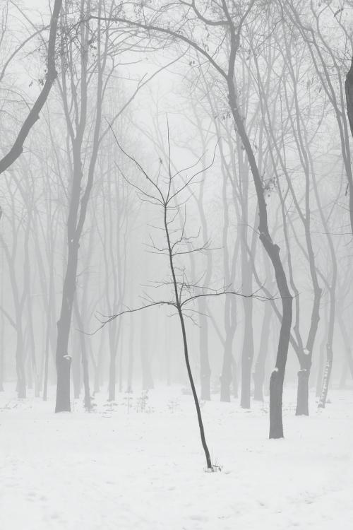 Misty winter #3