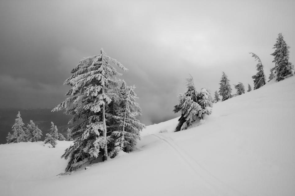 At broken fir