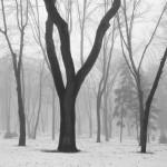 Misty winter #2
