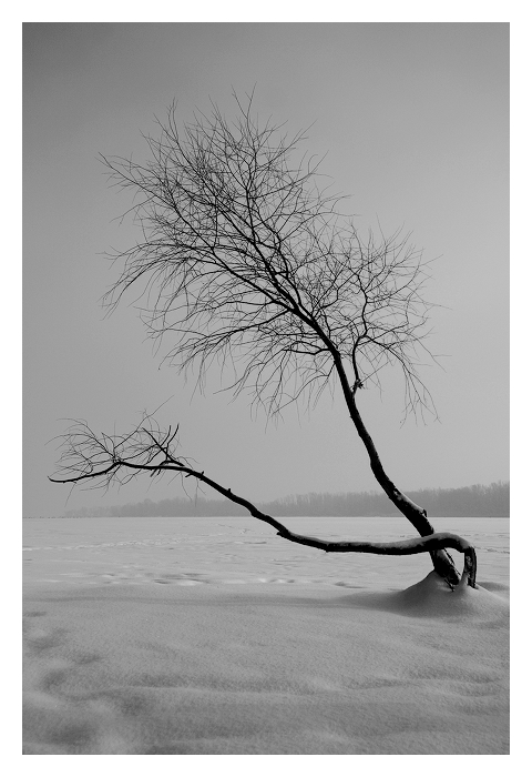 Зимняя грация
