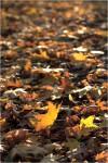 Осеннее одеяло