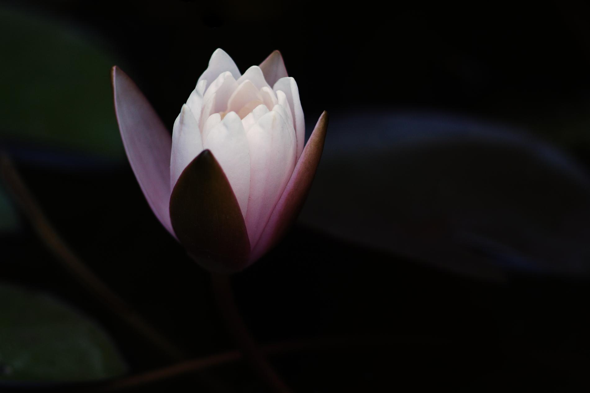 Hidden beauty #2